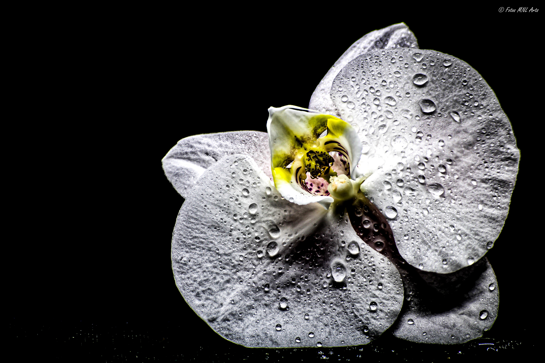 Orchidee Gestackt-2