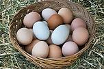 multicolored eggs.jpg