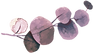 Eukalyptus_rosa3_neu.png