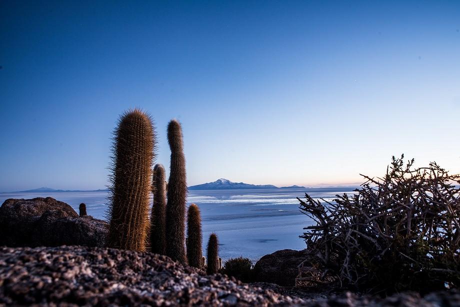 escursione isola cactus giganti peru salar de uyuni