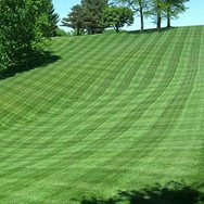Dedicated Landscaping pic of mowing line