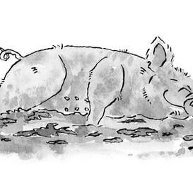 lazy pig.jpg