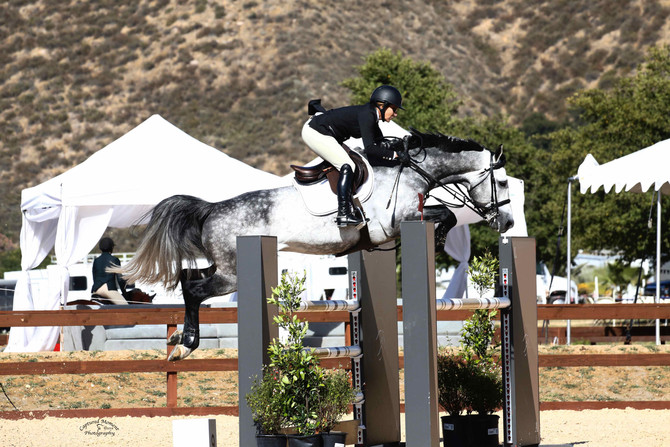 Q&A Series: How do you familiarize yourself with a new horse?