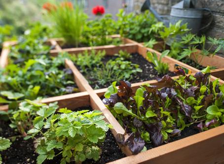 Garden Like A Pro!