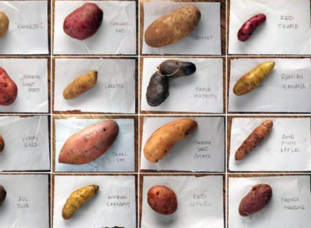 The Shades of Potatoes
