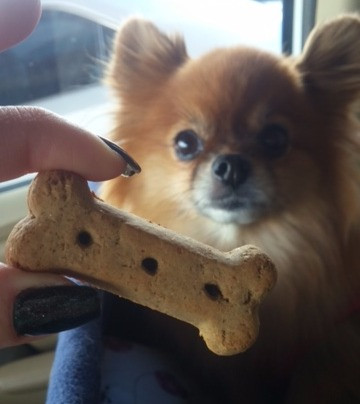 Cute Sophia Loren on National Dog Biscuit Day