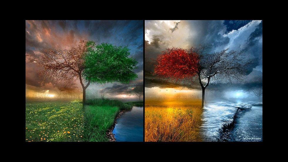 4 seasons.jpg
