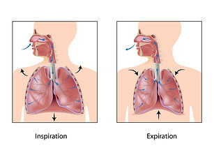 Diaphragmatic Breathing,  109th Street Massage, Edmonton, Alberta.jpg
