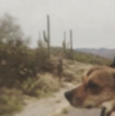 Roo Saguaros.jpg