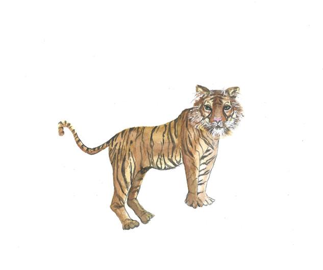 tigress_edited.jpg