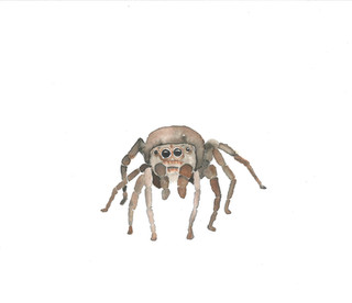 spider_edited.jpg