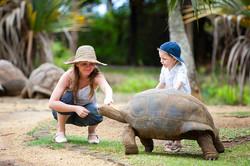 mauritius-turtle-istock