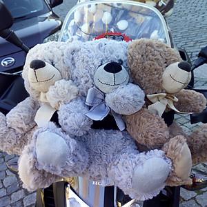 1º Portugal Teddy Bear Run