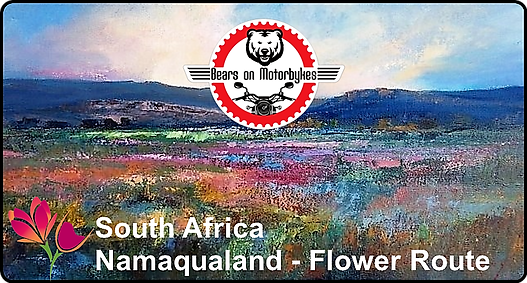 South Africa - Namaqualand - Flower Rout