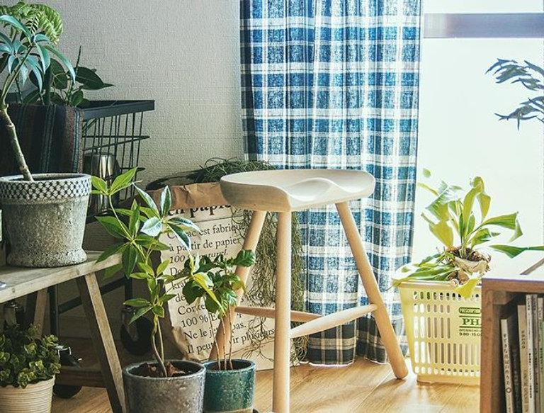家の窓際の風景🌱_暖かくなってきて植物たちが元気になってきました^ ^今日も暖