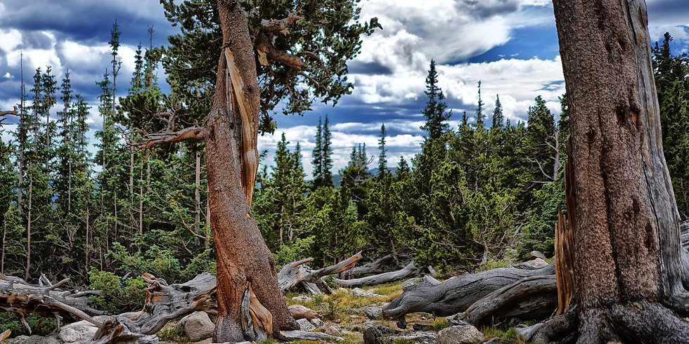 colorado-tourism-regions-mount-goliath-b