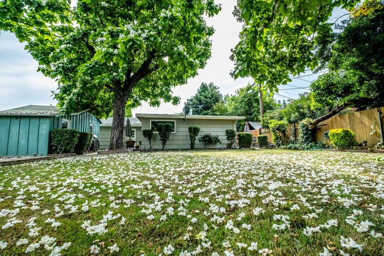 21-backyard-w-flowersjpg