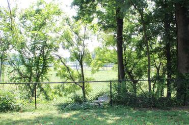 1. Backyard.jpg