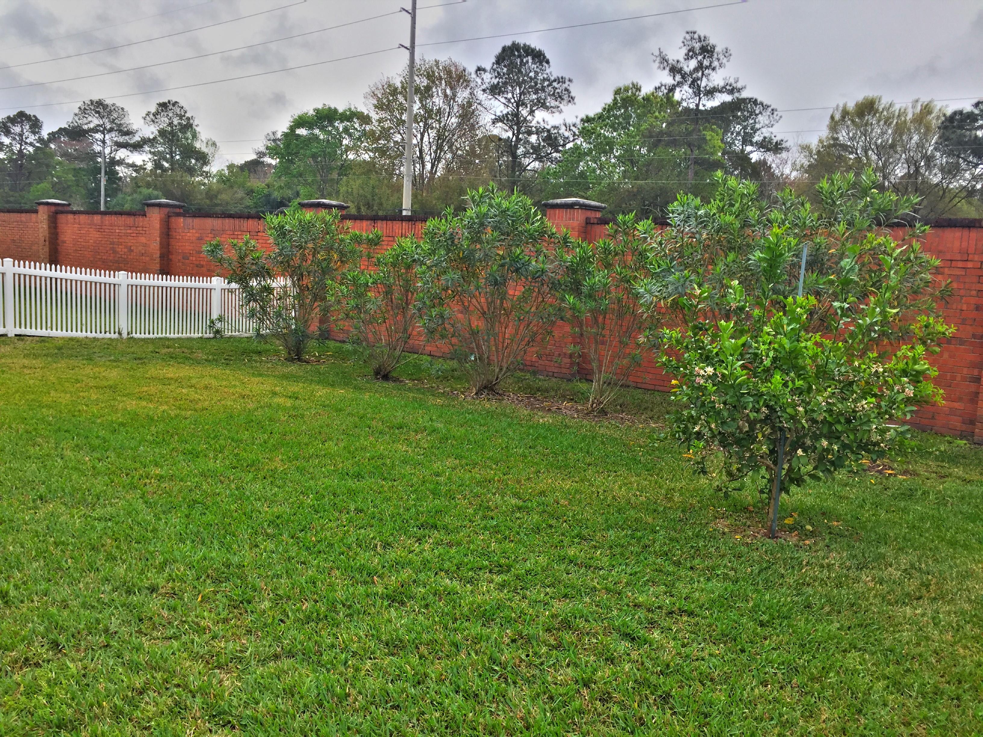 Backyard-3