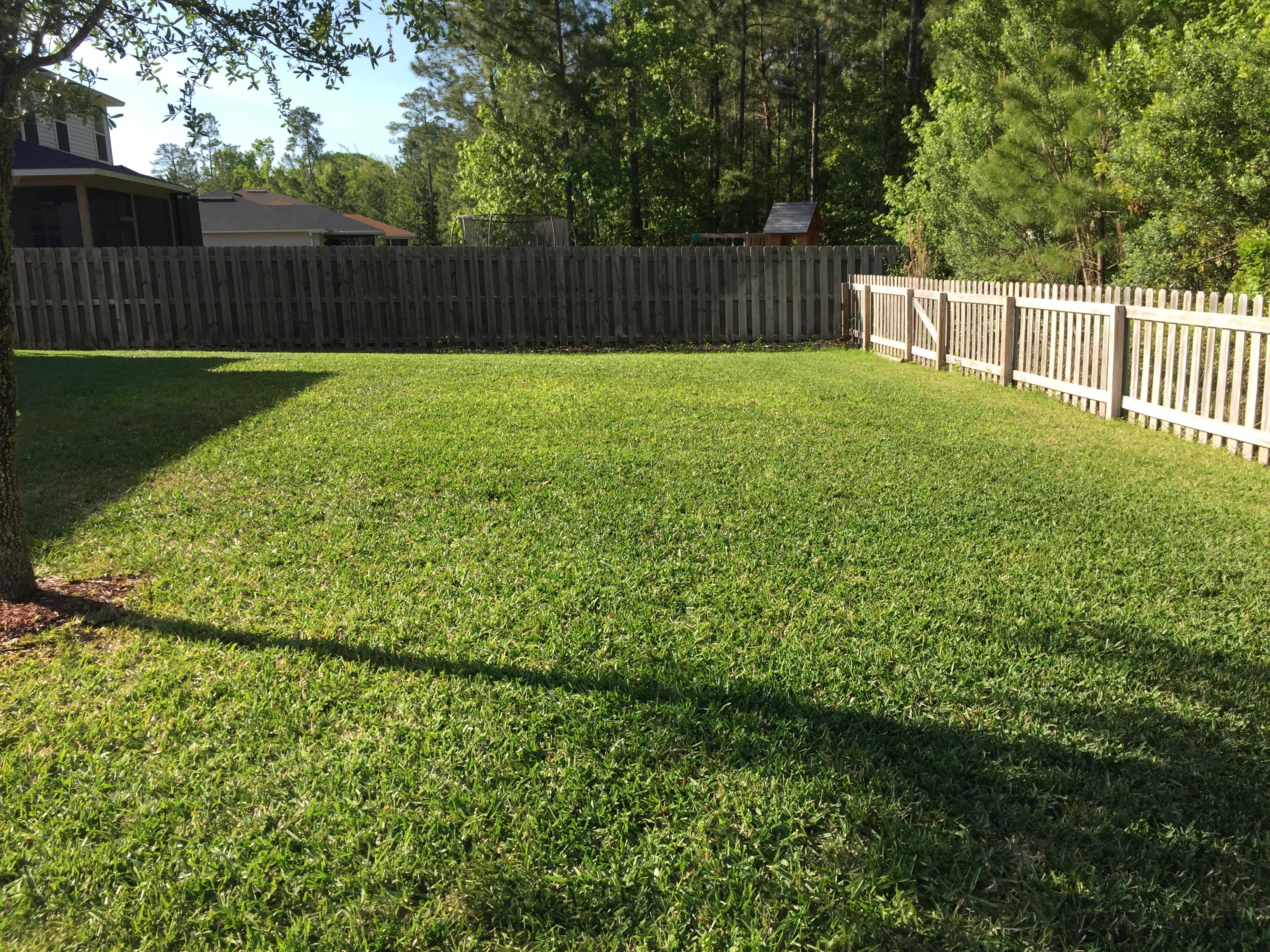 Backyard-5