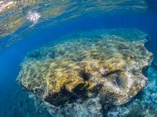Spectacular underwater landscape