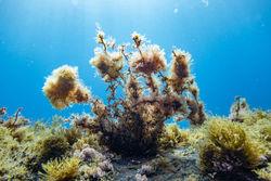Diverse marine plant life