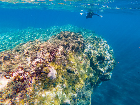 10 Good Reasons Why a Guided Snorkel Experience Is Absolutely Worth it