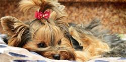 mobile dog grooming