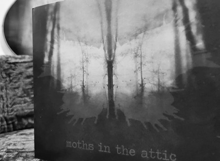 MITA Newsletter 10.27.20: Celebrating One Year of Moths in the Attic