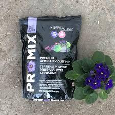 Premium African Violet Mix