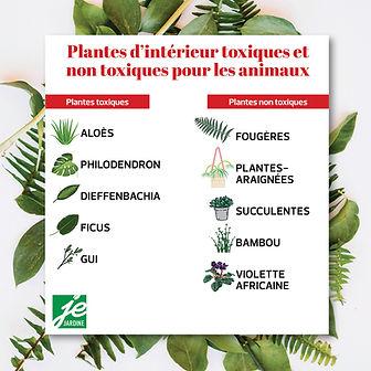 plantes-d-interieur-toxiques-et-non-toxi