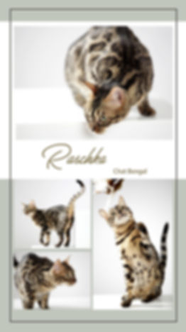 Sneak peek Raschka.jpg