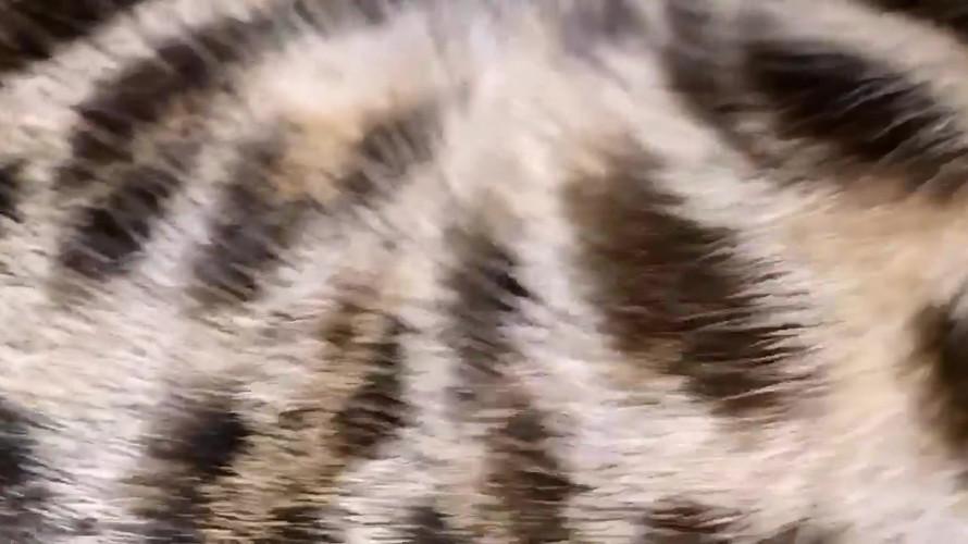 video-1614025496.mp4