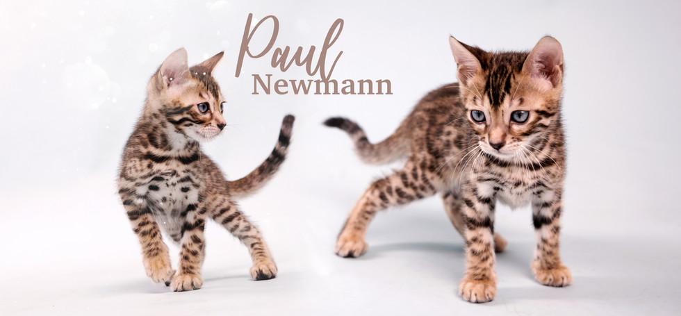 Paul Newmann