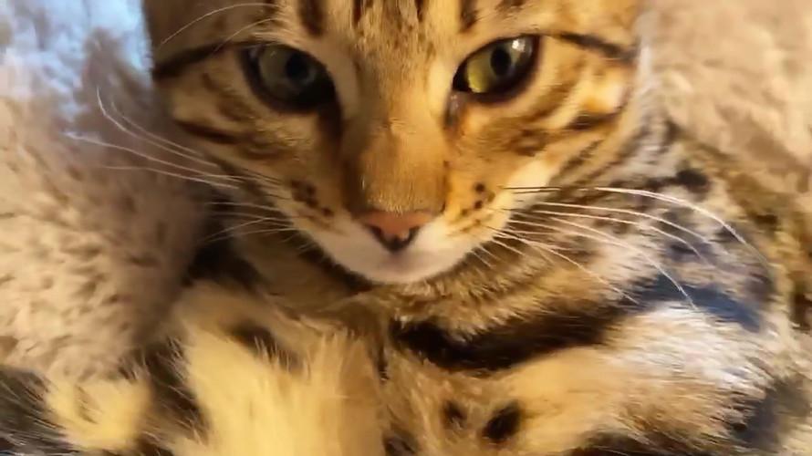 video-1611503211.mp4