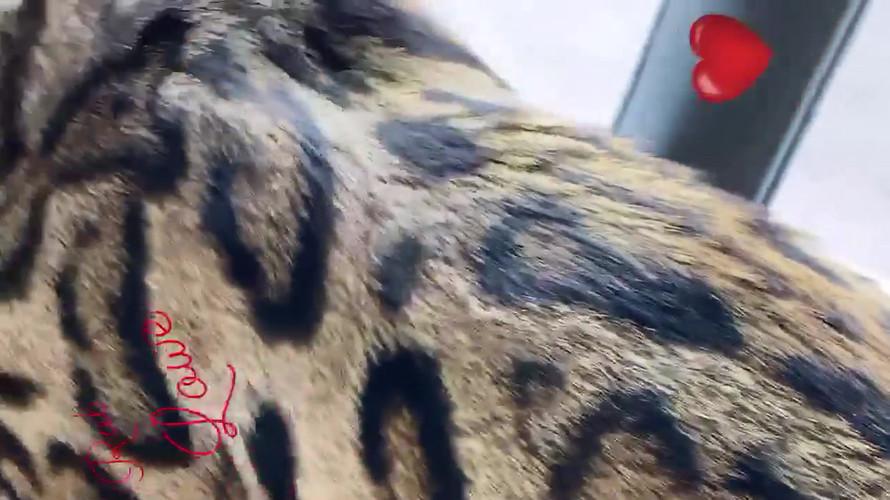video-1615130380.mp4