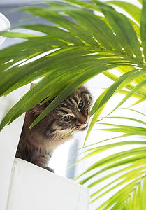 images_articles_chat_chat-plantes.jpg