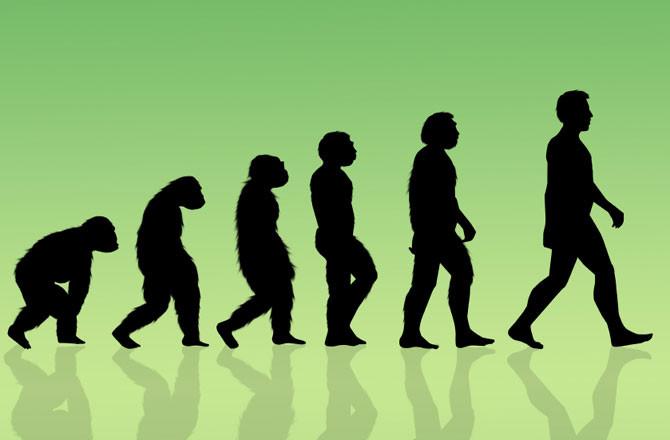 Evolution of men