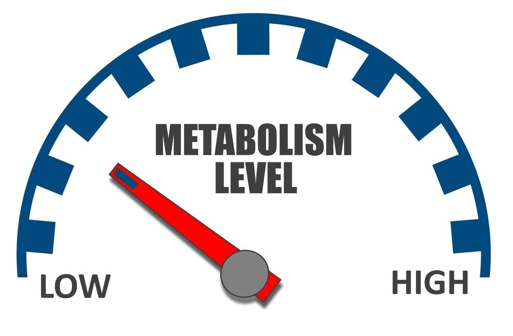 Diets slow down metabolism