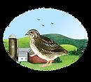 CGB logo 2020.png
