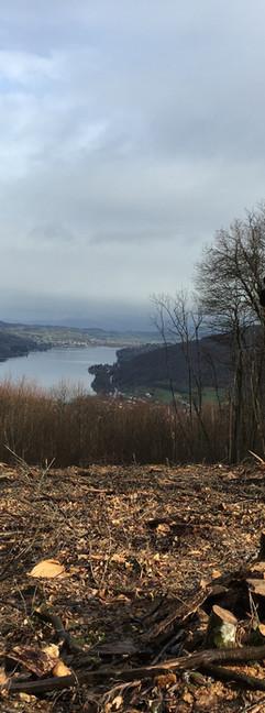 En descendant sur le Mont-Follet (50km) - Crédit photo : Trace De Trail (tous droits réservés)