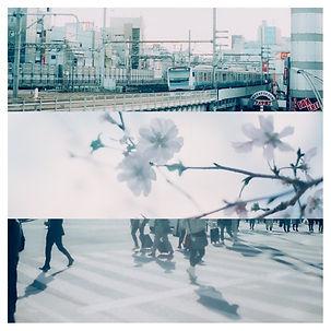 ウーロンハイと春に.jpg