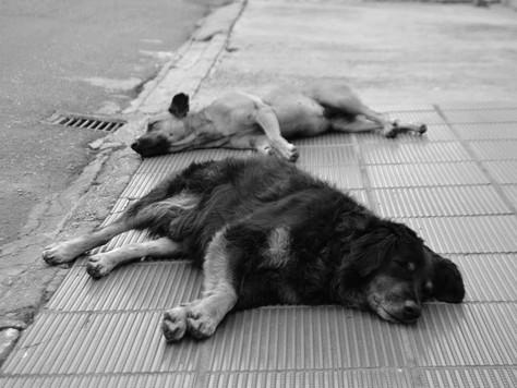 Animais bem cuidados têm expectativa de vida até três vezes maior