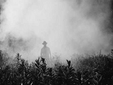 Brasil é o maior consumidor de agrotóxicos no mundo