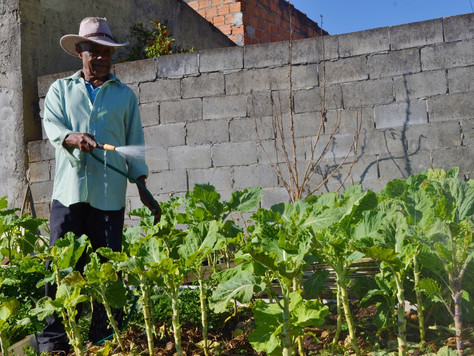 Liberação de agrotóxicos coloca em cheque a qualidade dos alimentos