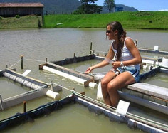 Cresce participação das mulheres na ciência no Brasil