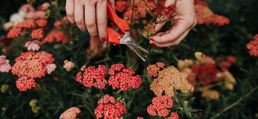 Tumbleweed & Fireflies Photography - Flo