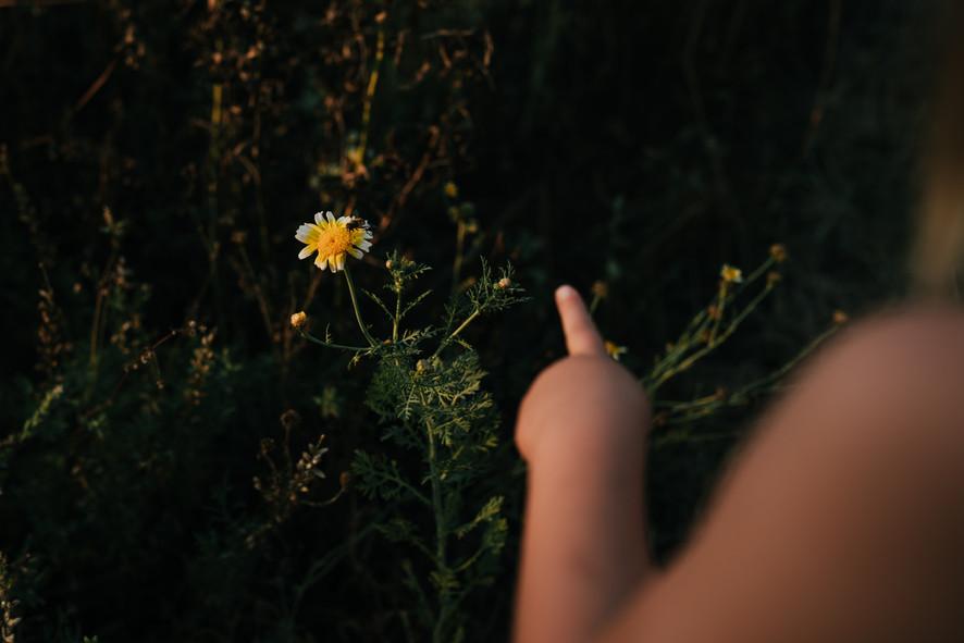 moestuinshoot moestuinieren tuinieren tuin mme zsazsa Mel's kitchen garden fotoshoot fotografie buitenmens natuurliefhebber buitenleven hobbyvarken kim leysen tumbleweed & fireflies photography eva krebbers slow living boek