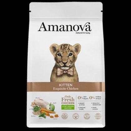 Amanova kitten
