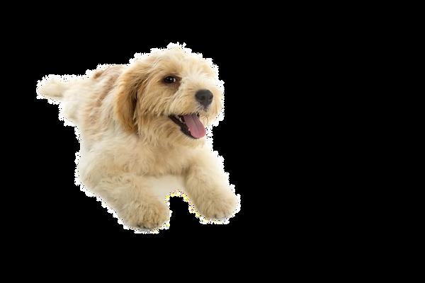 cane-cucciolo-isolato-su-sfondo-bianco_1